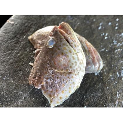 Grouper Head | Kepala Kerapu | 石斑鱼头 【Half 半边】