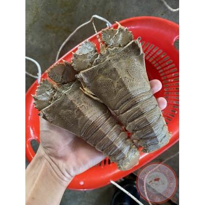 Slipper Lobster Meat | 虾婆肉 【500g+-/pack】